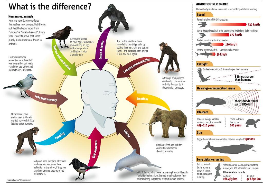 humans-vs-animals